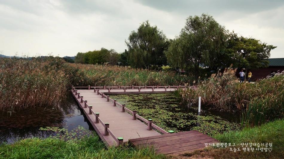 안산갈대습지공원 11