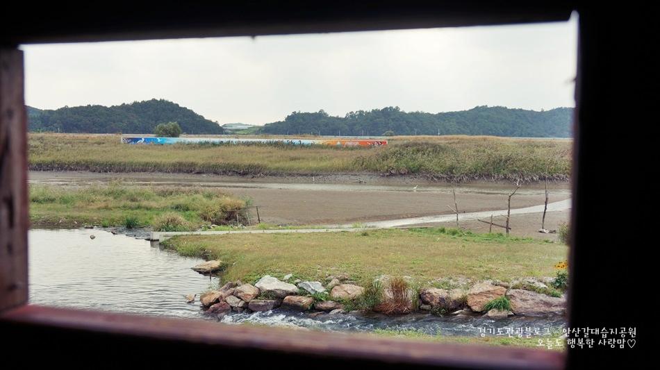 안산갈대습지공원 16