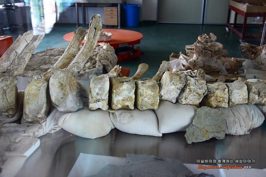 화성 공룡알 화석지 화석처리실