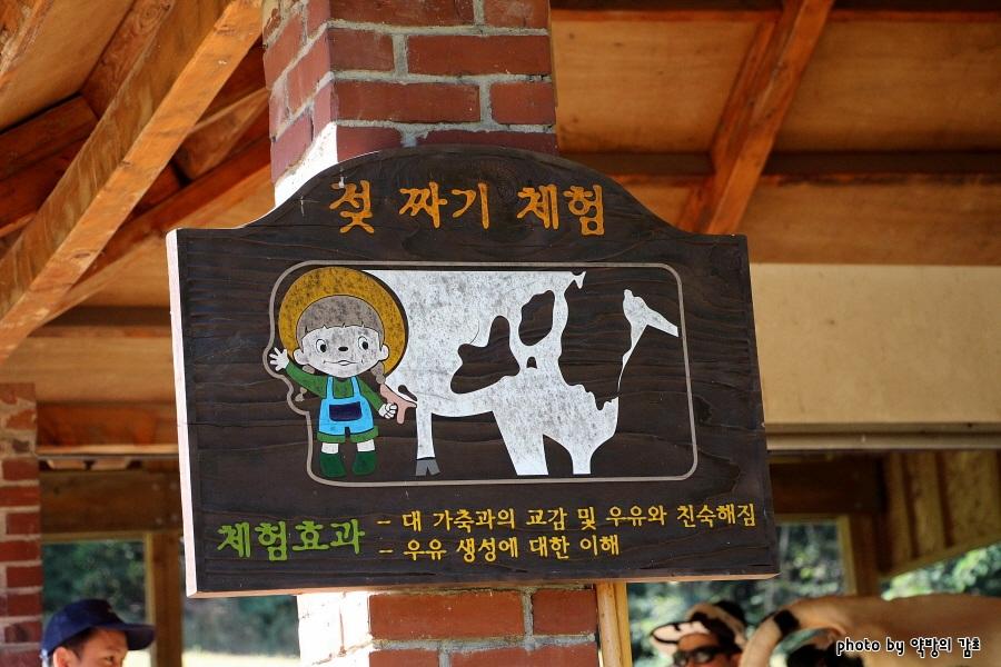 젖 짜기 체험|체험효과 | -대 가축과의 교감 및 우유와 친숙해짐 -우유 생성에 대한 이해