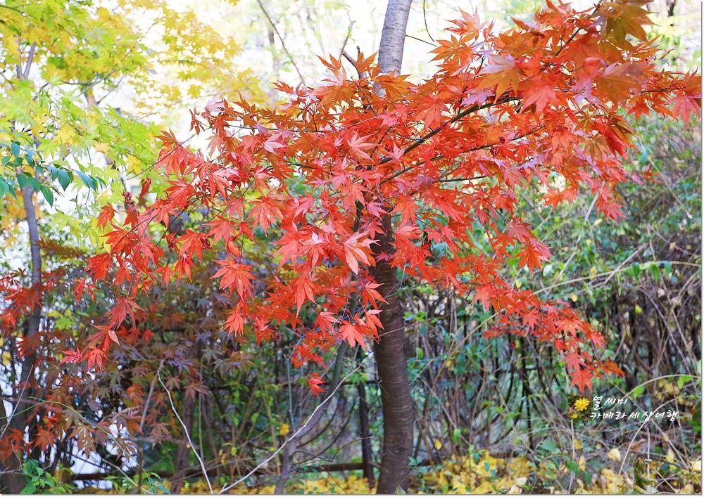 가을풍경에 둘러싸인 펄벅기념관