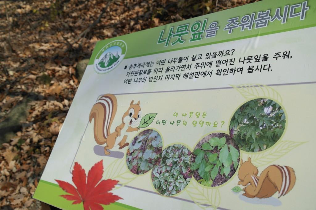 나뭇잎을 주워봅시다|-송추계곡에는 어떤 나무들이 살고 있을까요? 자연관찰로를 따라 올라가면서 주위에 떨어진 나뭇잎을 주워, 어떤 나무의 잎인지 마지막 해설판에서 확인하여 봅시다.