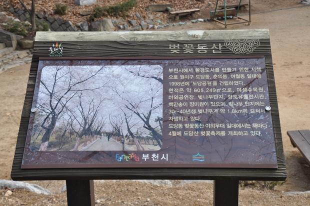 벚꽃동산|부천시에서 환경도시를 만들기 위한 시책으로 원미구 도당동, 춘의동, 여월동 일대에 1988년에 '도당공원'을 건립하였다. 면적은 약 605,249㎡으로, 야생수목원, 야외공연장, 벚꽃나무단지, 향토유물전시관, 백만송이 장미원이 있으며, 벚나무 단지엥는 30~40년생 벚나무가 약1.8km에 걸쳐서 자생하고 있다. 도당동 벚꽃동산 야외무대 일대에서는 해마다 4월에 도당산 벚꽃축제를 개최하고 있다.