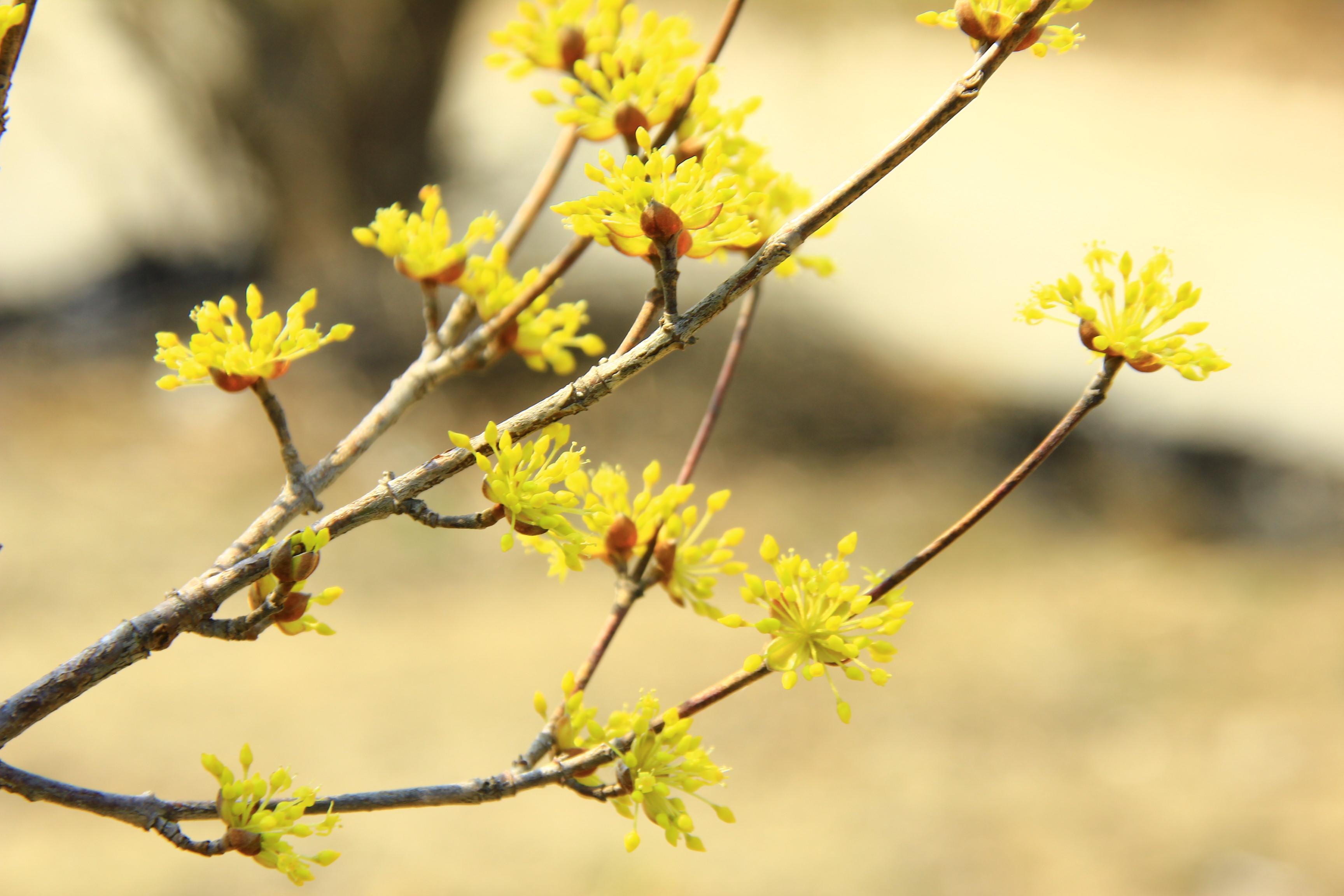 이천 산수유마을, 설봉공원 024