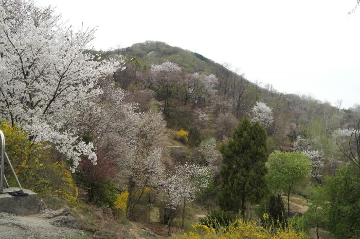 망우산 봄 풍경