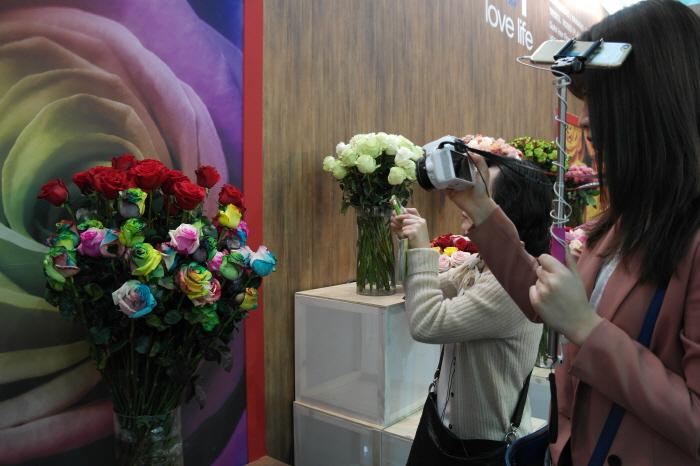 레인보우 장미