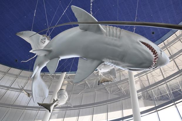상어 모형