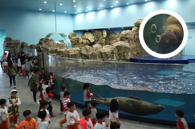 바다코끼리