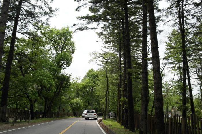 국립수목원 길
