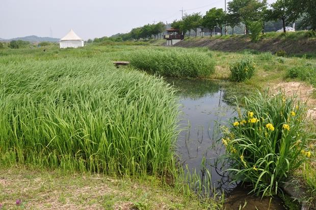 송사리 연못