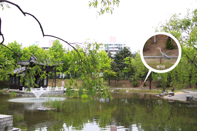 연못과 왜가리