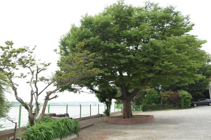 느티나무집 산책