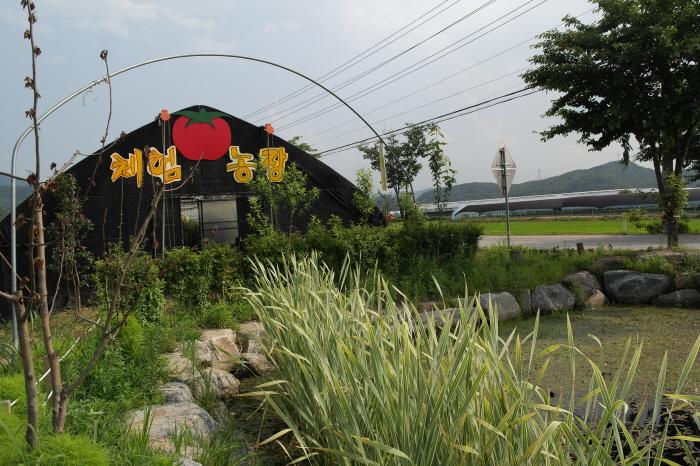 토마토 체험농장