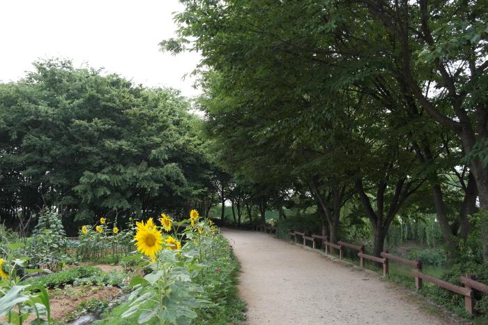 해바라기꽃이 핀 공원