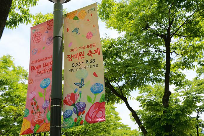 2015 서울대공원 장미원 축제 5.23~6.28 매일 21시까지 야간개장