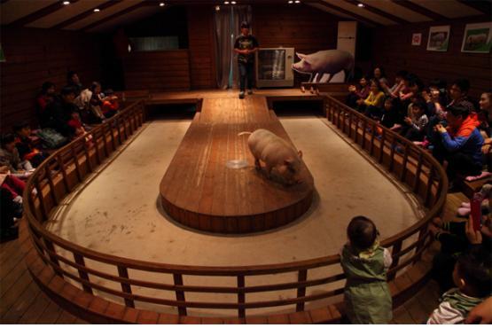 돼지박물관