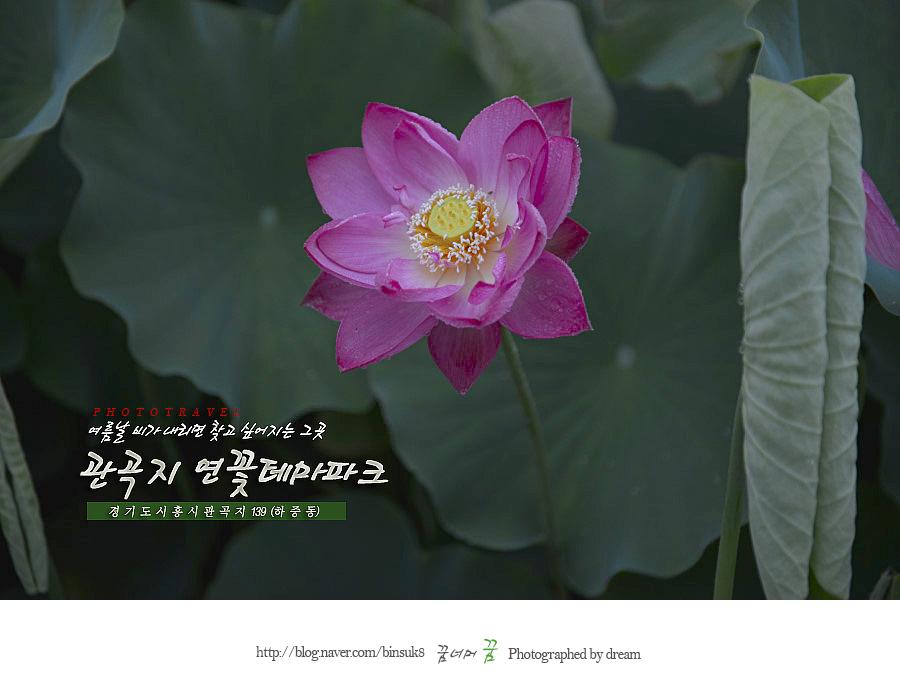 2015.07.13 관곡지연꽃테마파크