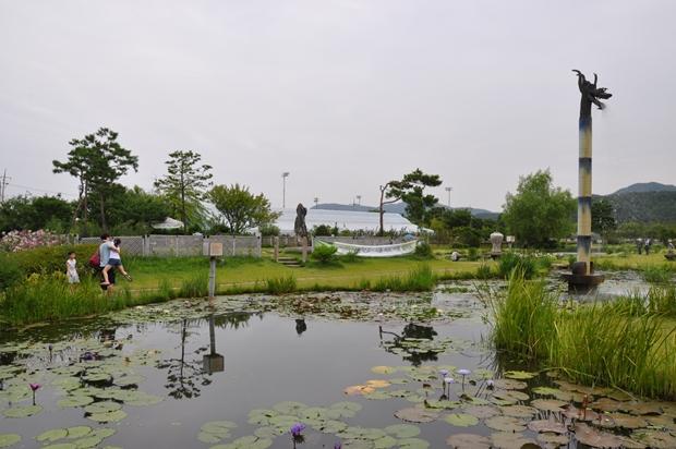 수련 연못