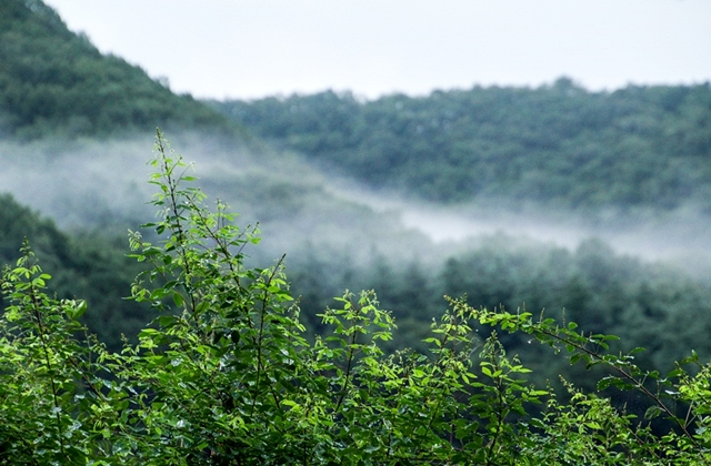 경안천습지생태공원005
