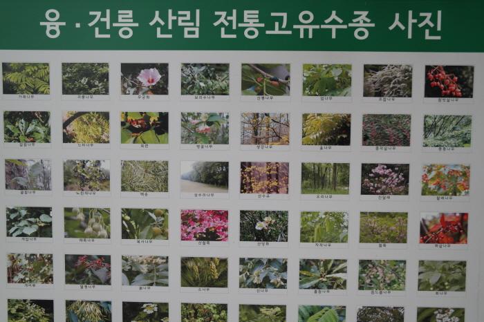 융건릉 전통고유수종