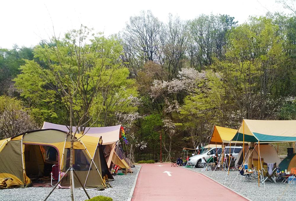 설치된 텐트들