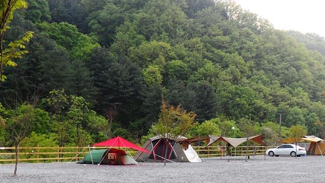 가평 물골 숲 계곡 캠핑장
