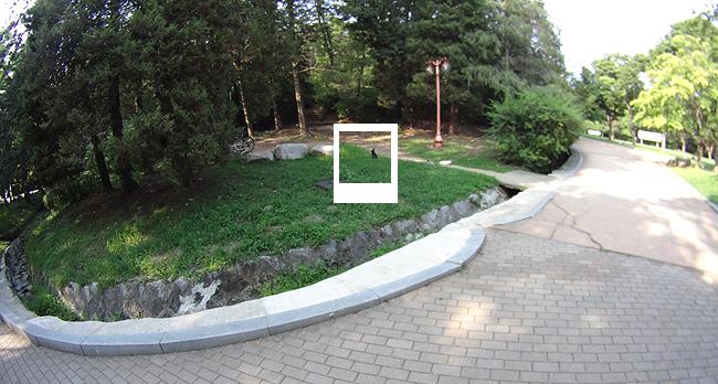 중앙공원 토끼