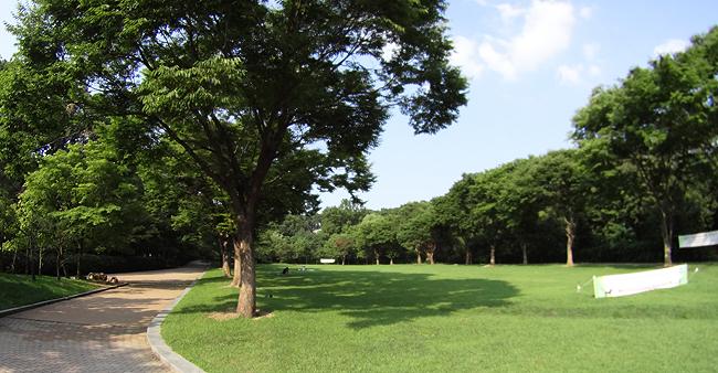 넓은 잔디광장