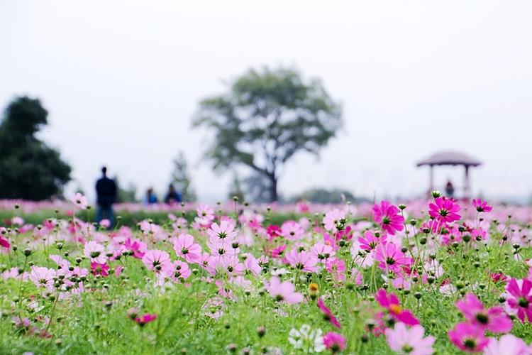 구리한강시민공원001