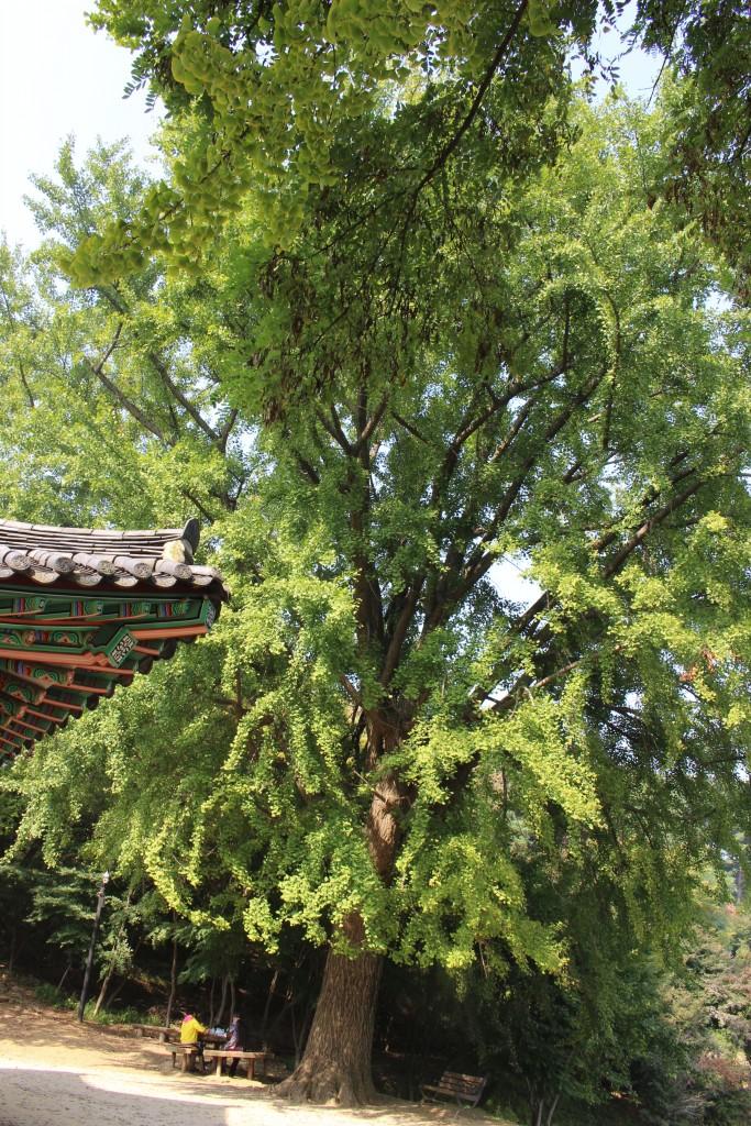 남한산성,연무대,침괘정 274