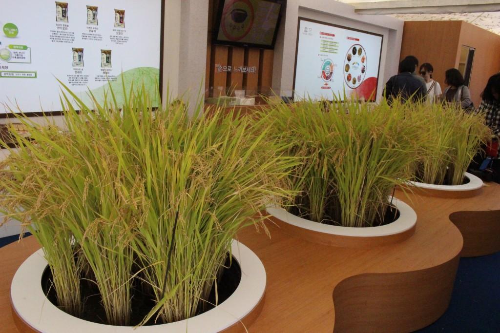 이천 쌀 문화축제 293