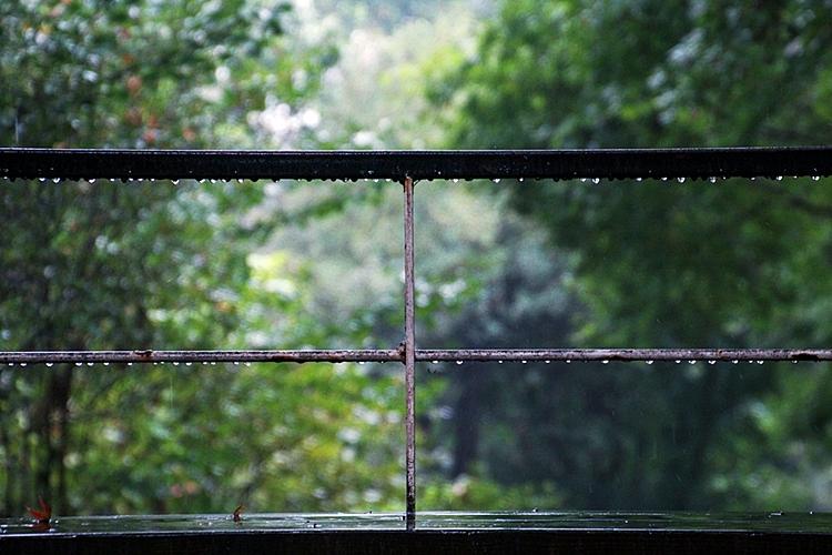 한택식물원011