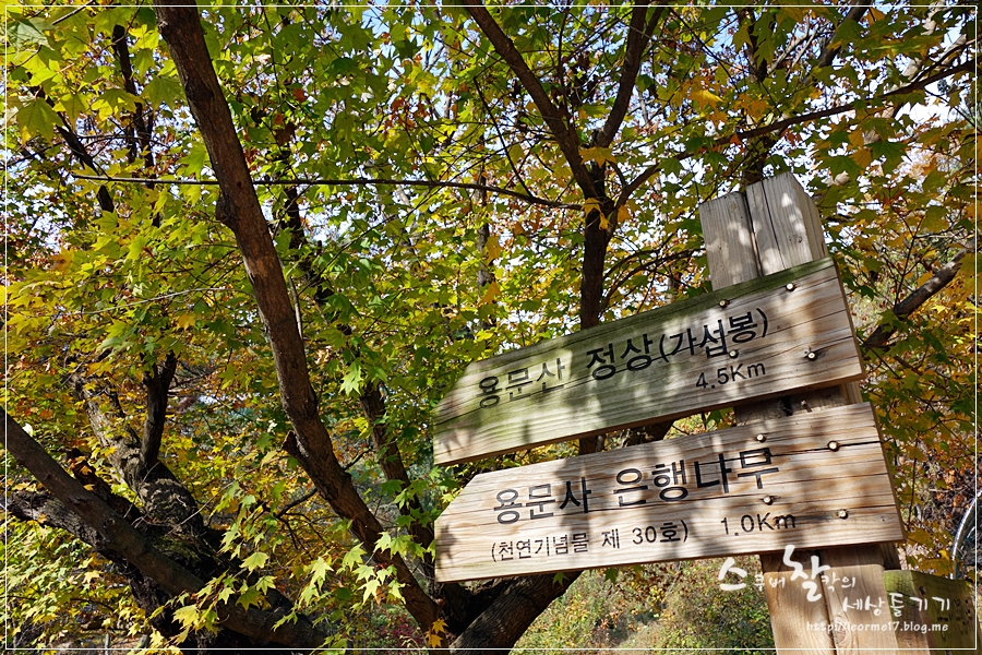 용문산 (10)