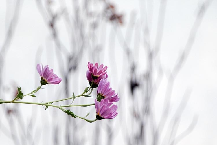 율봄식물원009