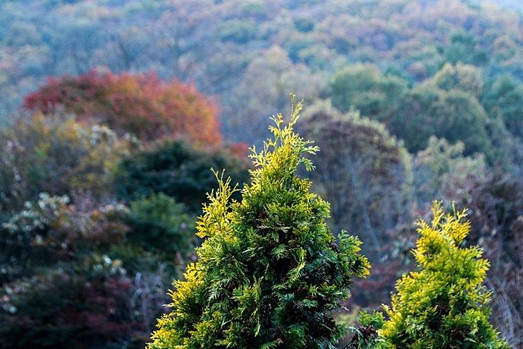 율봄식물원013