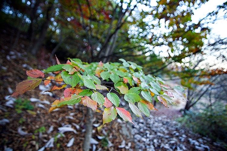 율봄식물원014
