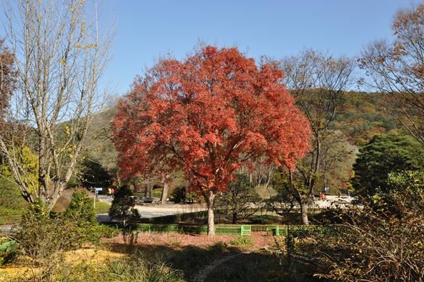 TREE563