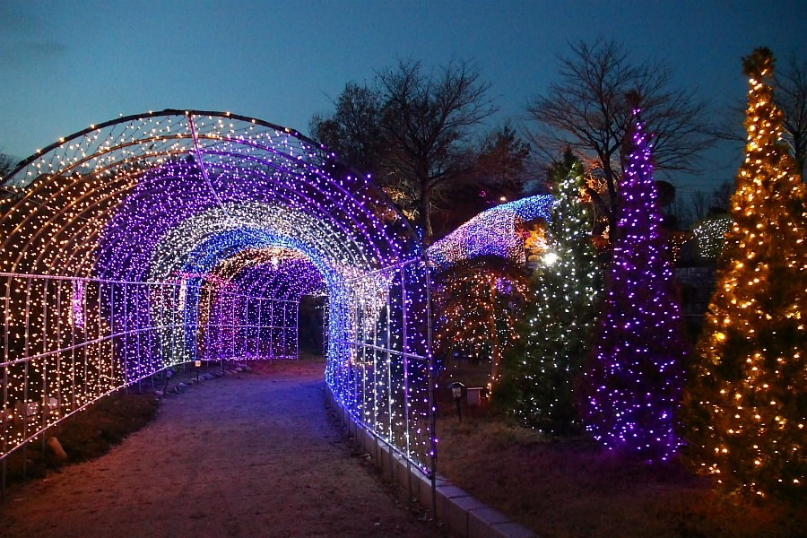 양평 들꽃수목원 야간 불빛축제