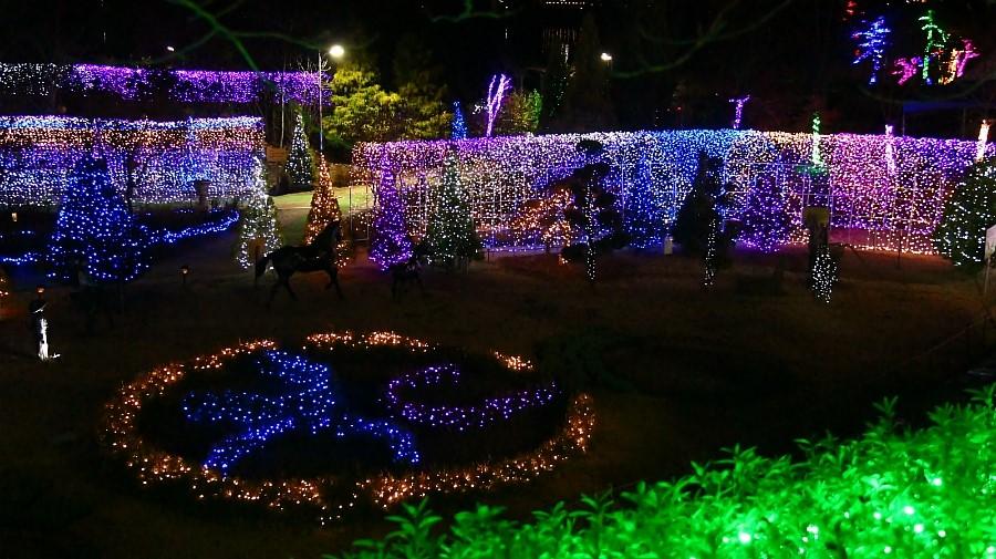 양평들꽃수목원 불빛축제