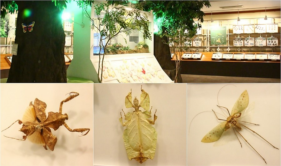 양평들꽃수목원 자연생태박물관