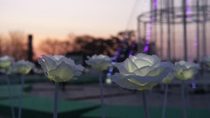 호수공원 LED장미