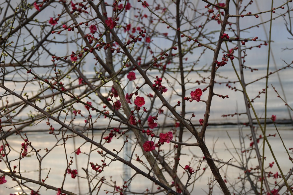 딸기축제.딸기,여운영박물관 053