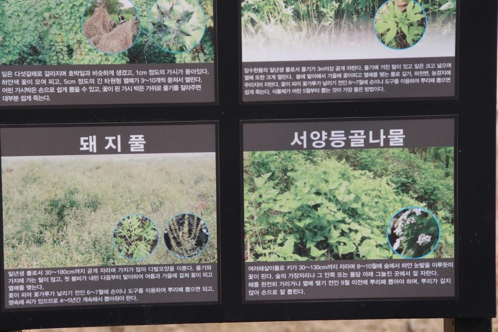 딸기축제.딸기,여운영박물관 077