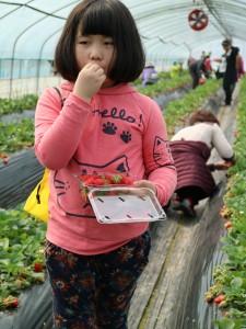 딸기를 먹는 아이