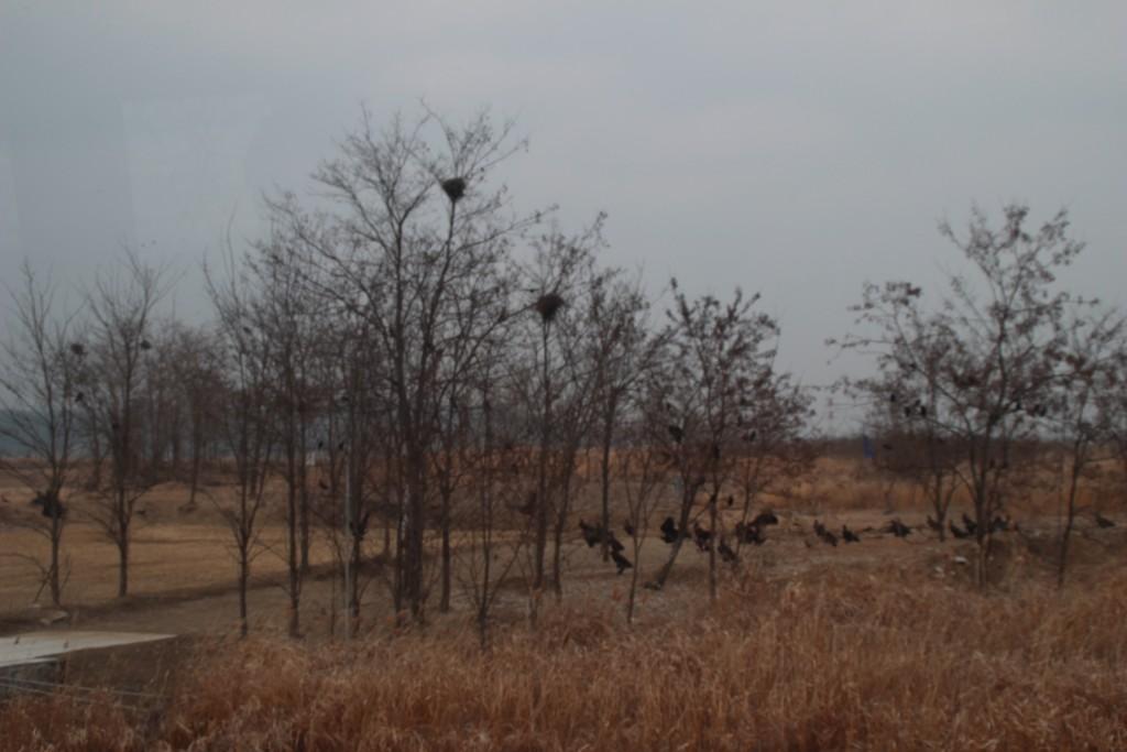캠프그리브스,독수리,도라산공원 050