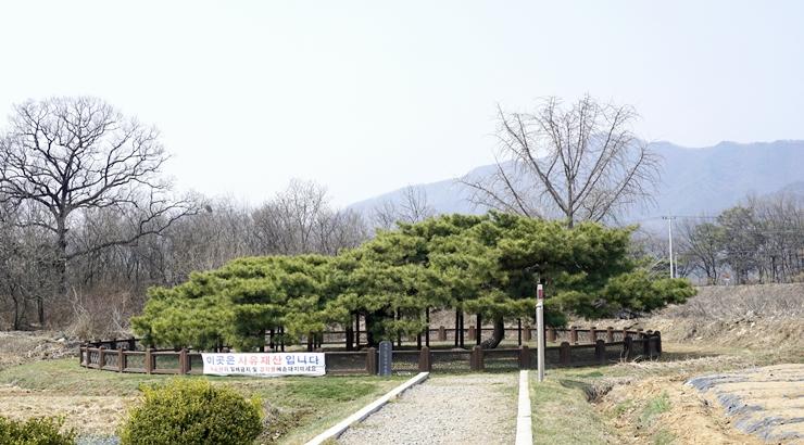 이천여행) 새봄, 산수유마을로 봄마중 갈까?