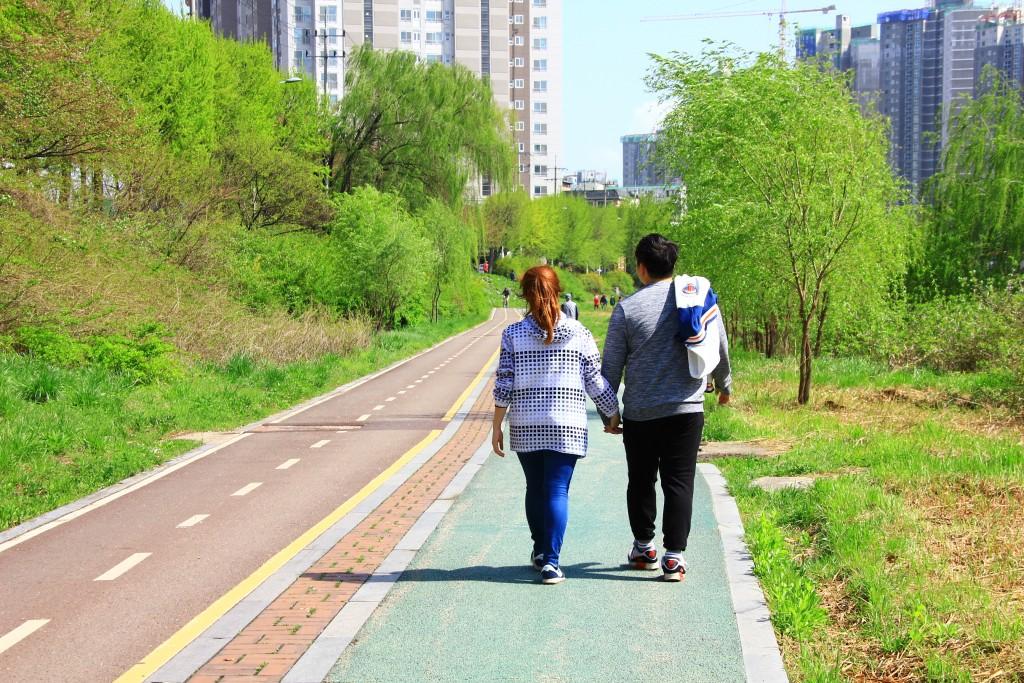 고창청보리축제 , 안양천 384
