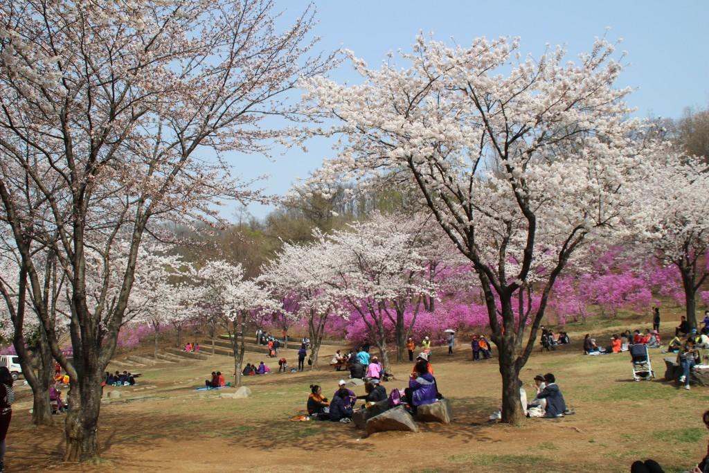 문원미산,도당산,무릉도원,동대 092