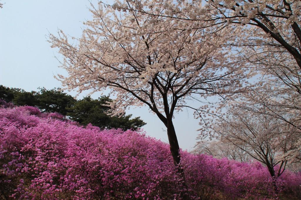 문원미산,도당산,무릉도원,동대 094