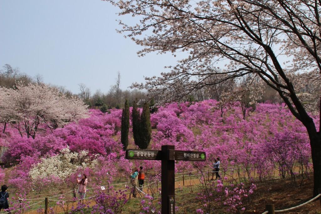 문원미산,도당산,무릉도원,동대 096